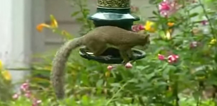 to feeder of spinning for out your birdseed squirrel keep birds the proof not bird save how gif squirrels feeders