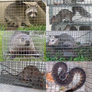 San Antonio Squirrel Removal And Wildlife Control
