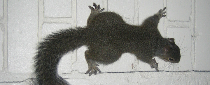 What To Do About A Squirrel In The Fireplace