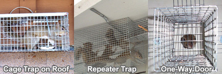 squirrel repeatertrap works like squirrels repeater is one enclosed open exclusion trapping doors the door great of end way trap a cage how an to except squirreltrapping instead on s it