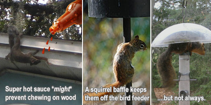 How To Keep Squirrels Away from Your House, Garden, Bird ...