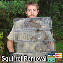 Boca Raton Squirrel Control
